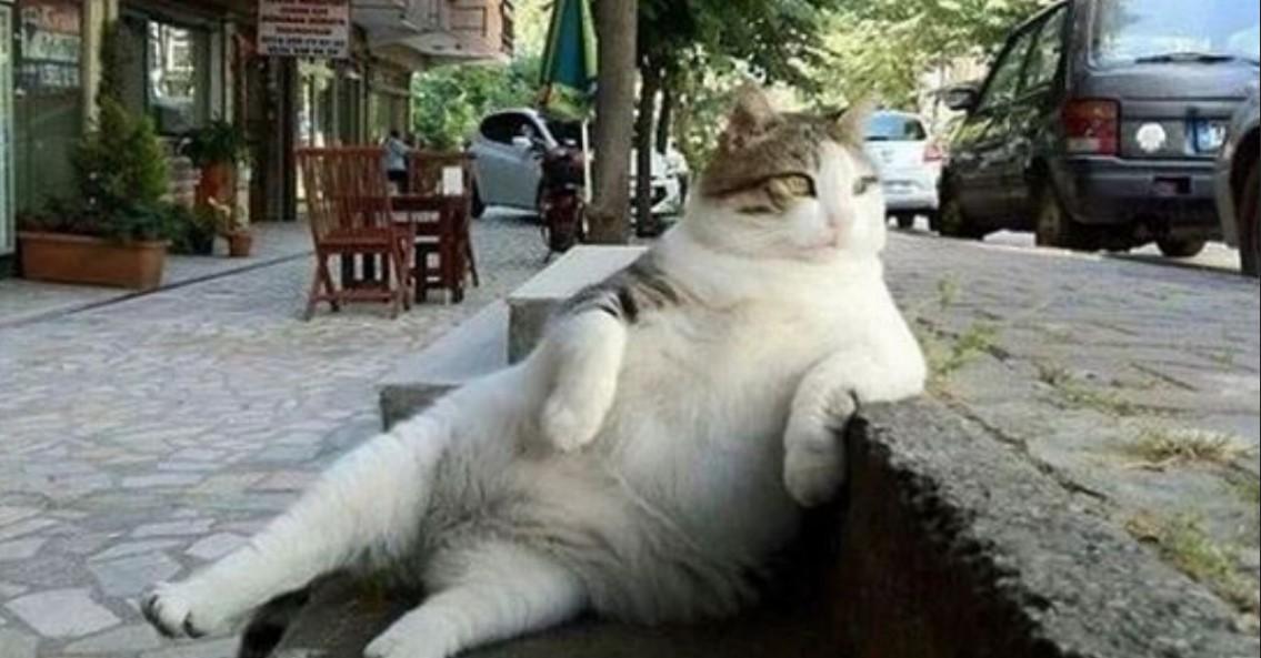 Diese Katze wollte sich nur auf dem Bordstein ausruhen, doch was dann geschah, konnte noch niemand ahnen.